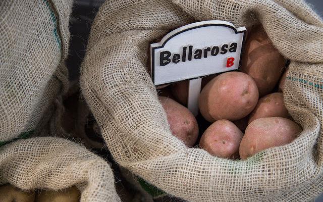 A Ty co wiesz o ziemniakach? Typy kulinarne ziemniaków